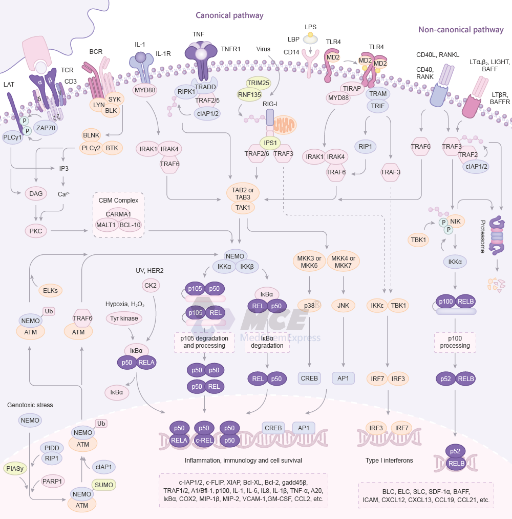 Targets/MCE-NF-kB-Signaling-Pathway.png