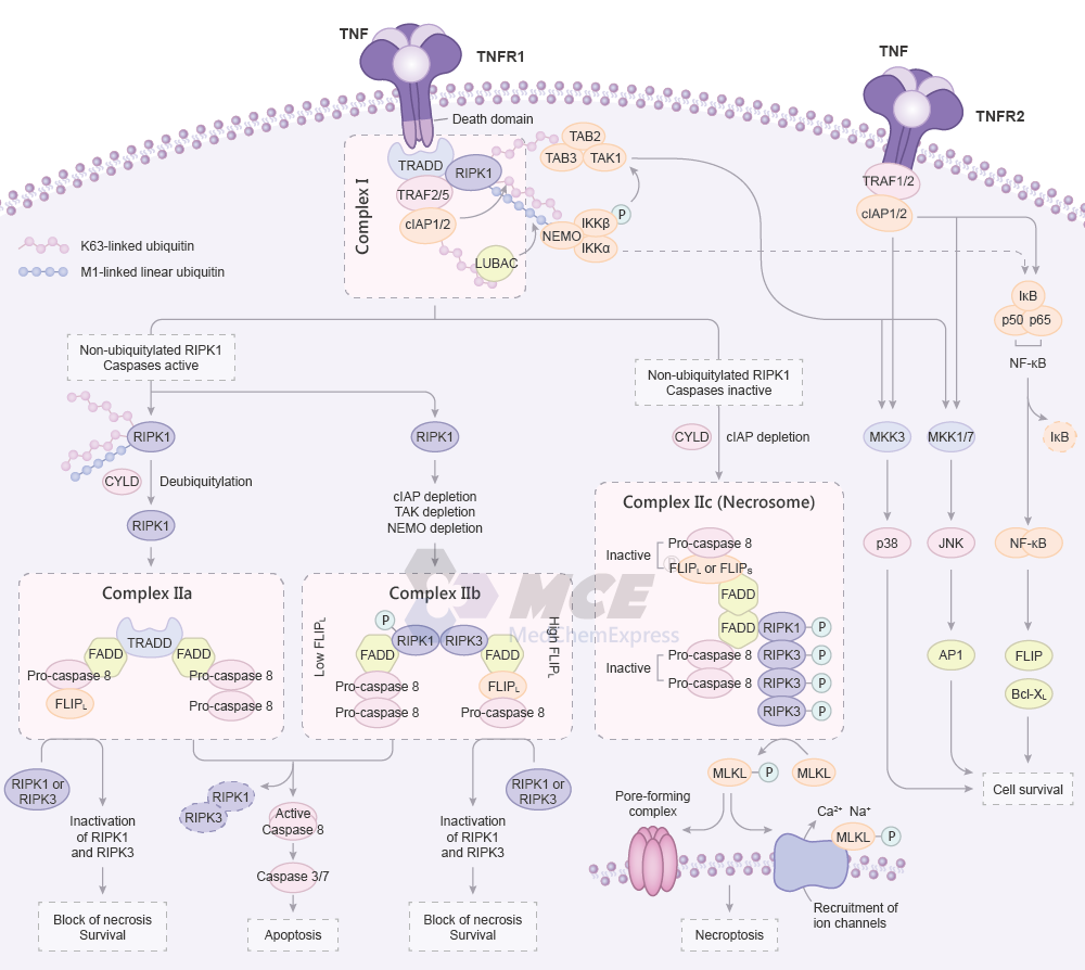 TNF Receptor Signaling Pathway Map (png)